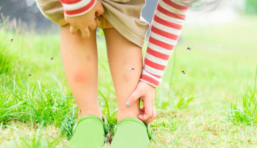 En otoño los mosquitos aún son una molestia, evita sus picaduras